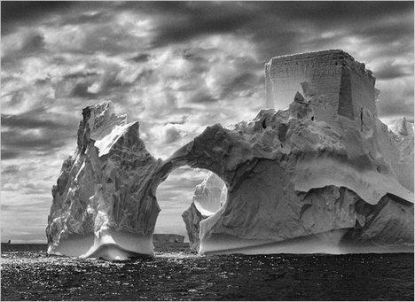 salgado-antartica